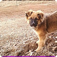 Adopt A Pet :: Kota - COURTESY POSTING - Pulaski, TN