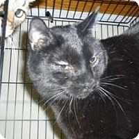 Adopt A Pet :: Salem - Milwaukee, WI