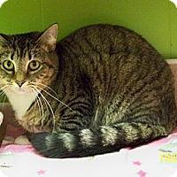 Adopt A Pet :: Hopper - Dover, OH