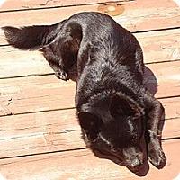 Adopt A Pet :: Nova - Hamilton, ON