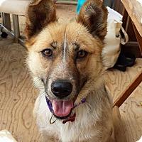 Adopt A Pet :: Gaby - Pierrefonds, QC