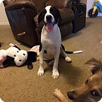 Adopt A Pet :: Doc - Daleville, AL