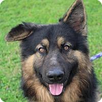 Adopt A Pet :: Shaggy - Red Bluff, CA