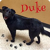 Adopt A Pet :: Duke - Snyder, TX