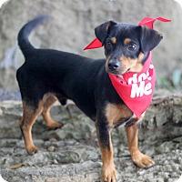 Adopt A Pet :: Dave - Dalton, GA