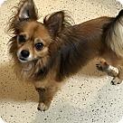 Adopt A Pet :: Fozzy