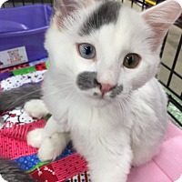 Adopt A Pet :: Kairo - Burbank, CA