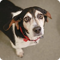 Adopt A Pet :: Shelly - Kettering, OH