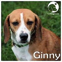 Adopt A Pet :: Ginny - Novi, MI