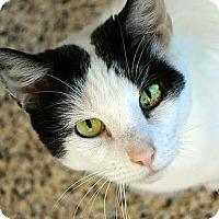 Adopt A Pet :: Kirby - Aiken, SC