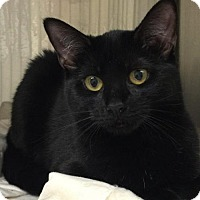 Adopt A Pet :: Maple - Bridgewater, NJ