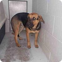 Adopt A Pet :: A009706 - Rosenberg, TX