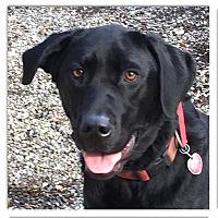 Adopt A Pet :: Maggie needs lots of love - Sacramento, CA