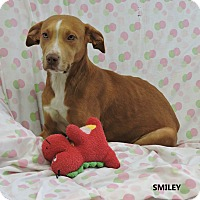 Adopt A Pet :: Smiley - Washington, GA