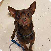 Adopt A Pet :: Sampson - Crossville, TN