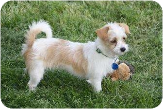Terrier (Unknown Type, Small) Mix Dog for adoption in Edmonton, Alberta - Precious