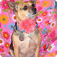 Adopt A Pet :: Trixie - Knoxville, TN