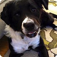 Adopt A Pet :: Krista - Wakefield, RI
