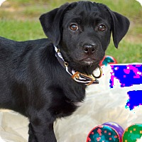 Adopt A Pet :: *Lyndey - PENDING - Westport, CT