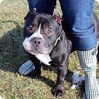 Adopt A Pet :: Dorsey D-68524 - Westampton, NJ