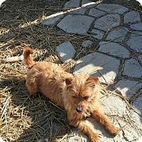 Adopt A Pet :: Max Jr - Harrisburg, PA
