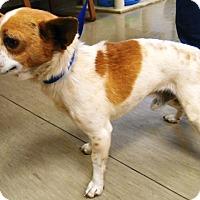 Adopt A Pet :: JoJo - Redding, CA
