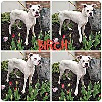 Adopt A Pet :: Birch - Garden City, MI