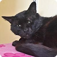 Adopt A Pet :: Hank - Salisbury, MA