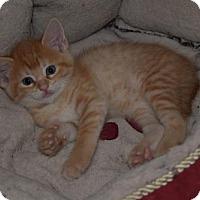 Adopt A Pet :: Rey - Hurst, TX