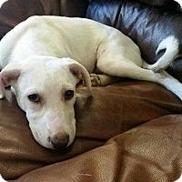 Adopt A Pet :: ASIA - Calgary, AB