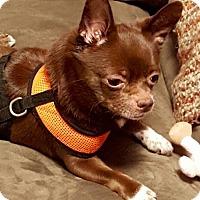 Adopt A Pet :: Spike - Rockville, MD
