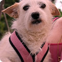 Adopt A Pet :: Frannie - Studio City, CA