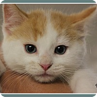 Adopt A Pet :: Oliver - New Richmond,, WI