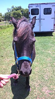 Pony - Welsh Mix for adoption in Hitchcock, Texas - Sara Lee
