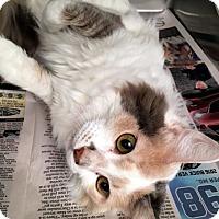Adopt A Pet :: Abby - North Las Vegas, NV