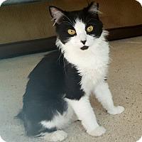 Adopt A Pet :: Nolie - Temecula, CA