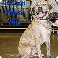 Adopt A Pet :: Hudson - Cheney, KS