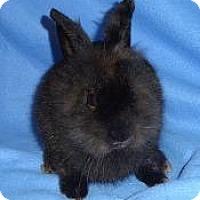 Adopt A Pet :: Pixie - Woburn, MA