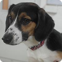 Adopt A Pet :: FLYNN - Indiana, PA
