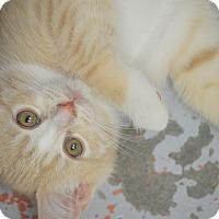 Adopt A Pet :: Feta - San Leon, TX