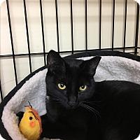 Adopt A Pet :: Luna - Oakley, CA