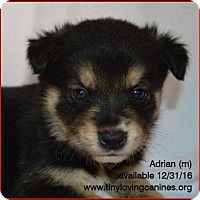 Adopt A Pet :: Adrian - Simi Valley, CA
