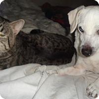 Adopt A Pet :: Jim Rose - San Diego/Imperial Beach, CA