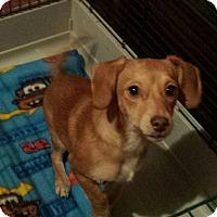 Adopt A Pet :: Razbeerry - Cleveland, OH