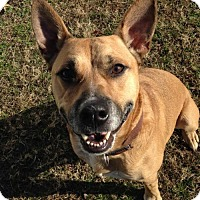 Adopt A Pet :: 1611-0590 Harley - Virginia Beach, VA
