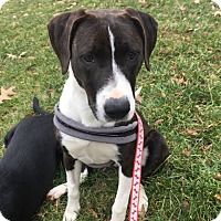 Adopt A Pet :: LEEZA - Williamsburg, VA