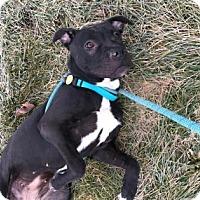 Adopt A Pet :: Lida - Cleveland, OH