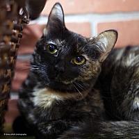 Adopt A Pet :: Nimiria - Tucson, AZ