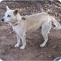 Adopt A Pet :: Polar Bear - Conyers, GA