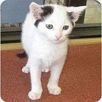 Adopt A Pet :: Squeaks - Los Alamitos, CA